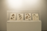 Herbarium Collection by Augustana College, Rock Island Illinois