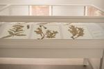 Herbarium Collection by Augustana College, Rock Island Illinois