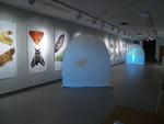 Installation Views