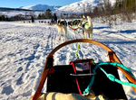 Dogsled in Norway by Autumn Anderson